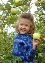 Apple pick